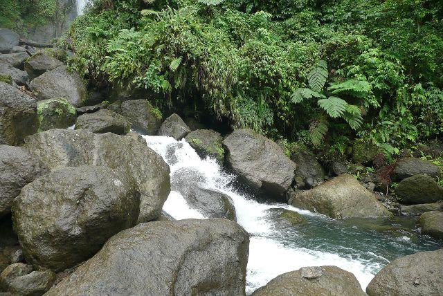 Zdjęcia: rainforest, east coast, mokre kamienie, DOMINIKA