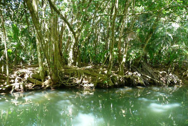 Zdjęcia: NP Dominika, w pobliżu Prince Rupert Bay, Indian River, DOMINIKA