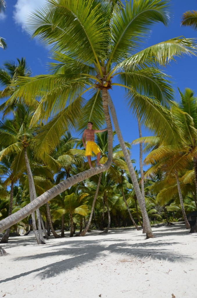 Zdjęcia: Dmonikana, Saona, palma, DOMINIKA
