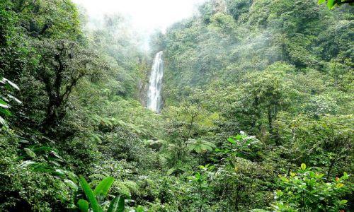 Zdjęcie DOMINIKA / east coast / rainforest / wodospad