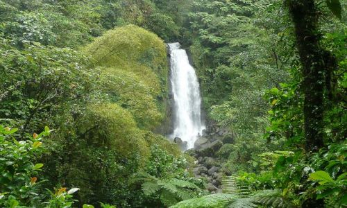 Zdjecie DOMINIKA / east coast / rainforest / wodospad 2