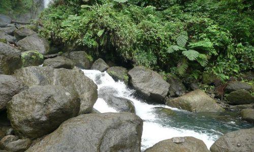 Zdjęcie DOMINIKA / east coast / rainforest / mokre kamienie