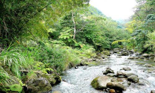 Zdjęcie DOMINIKA / Rainforest / centrum wyspy / Jedna z 365 rzek Dominiki