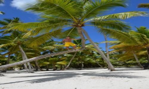 Zdjęcie DOMINIKA / Saona / Dmonikana / palma