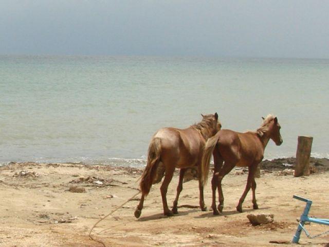 Zdj�cia: Samana, konie Samana, DOMINIKANA
