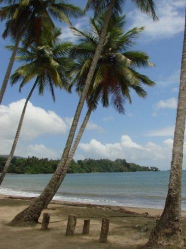 Zdjęcia: Samana, Palmy kokosowe, DOMINIKANA