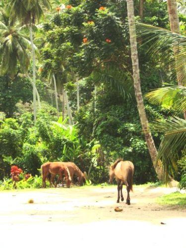 Zdjęcia: Samana, Samana Horses, DOMINIKANA