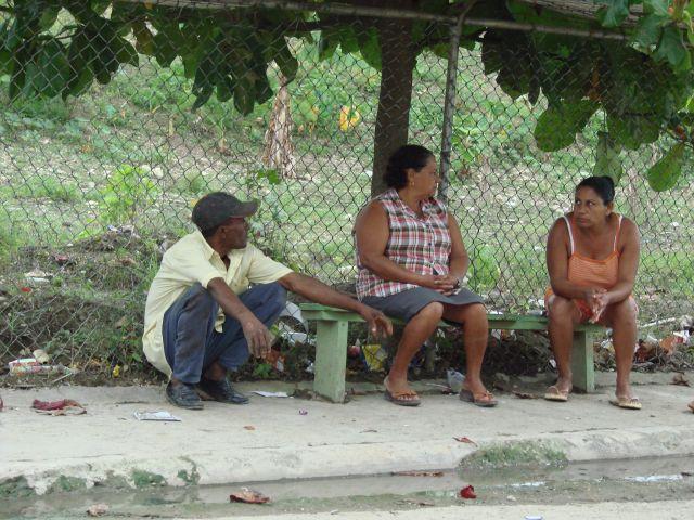 Zdjęcia: Puerto Plata, pod drzewkiem najlepiej pogadać, DOMINIKANA