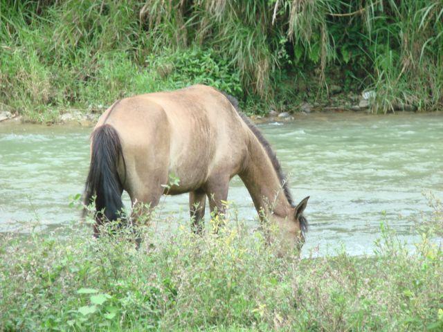 Zdjęcia: okolice Jarabacoa , u zbiegu rzek, DOMINIKANA