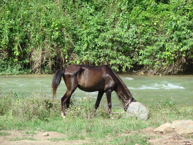 Zdjęcia: okolice Jarabacoa, chudzina, DOMINIKANA