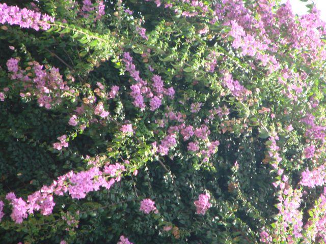 Zdjęcia: okolice Jarabacoa, kwiaty okolic Jarabacoa, DOMINIKANA