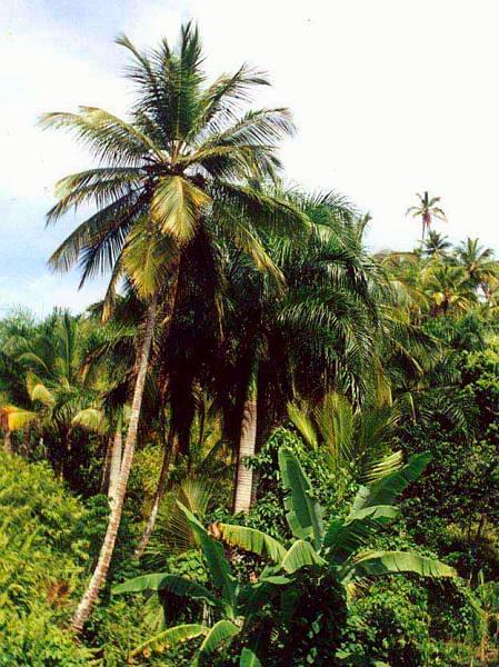 Zdjęcia: dżungla, Cordyliera Środkowa, Dżungla, DOMINIKANA