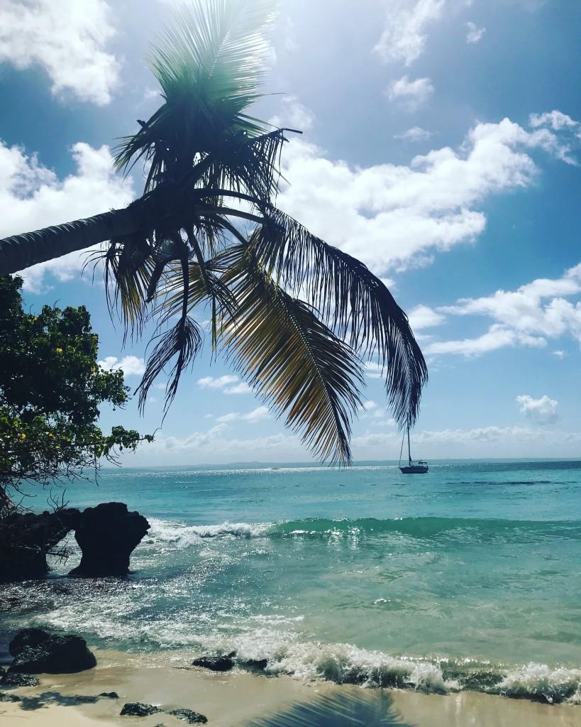Zdjęcia: Półwysep Samana , Półwysep Samana , Kultowa palma na Samana, DOMINIKANA