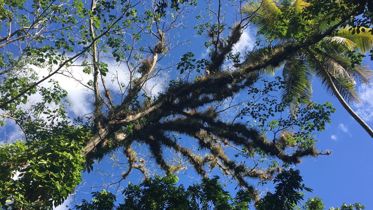 Zdjęcia: Półwysep Samana , Półwysep Samana , W drodze na wodospad , DOMINIKANA
