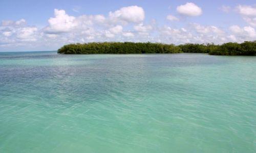 Zdjęcie DOMINIKANA / Bayahibe / Morze Karaibskie  / Mangrove Forest Caribbean Sea