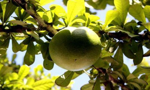 Zdjęcie DOMINIKANA / Bayahibe / Bayahibe / Dominikańska Pomarańcza
