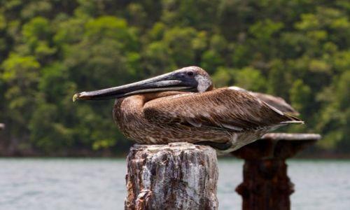 Zdjęcie DOMINIKANA / wybrzeże północne / los Haitises / Ptaki cd