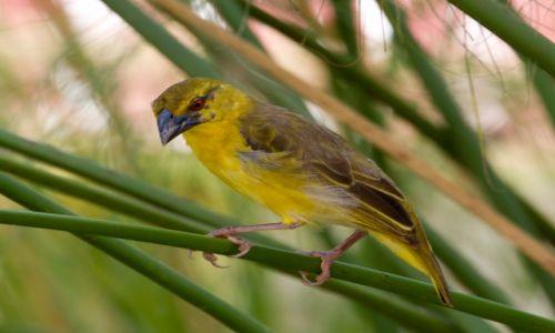 Zdjecie DOMINIKANA / wybrzeże północne / los Haitises / Ptaki cd