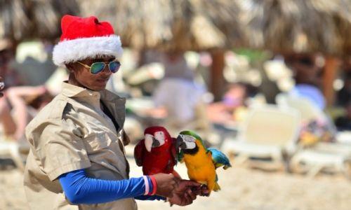 Zdjęcie DOMINIKANA / Punta Cana / Plaża Bavaro / ary dwie
