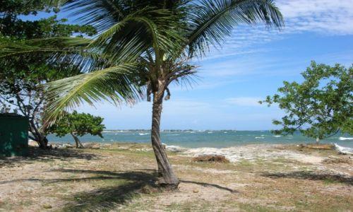 Zdjęcie DOMINIKANA / Republica Dominicana / San Pedro / Dominicana Palm