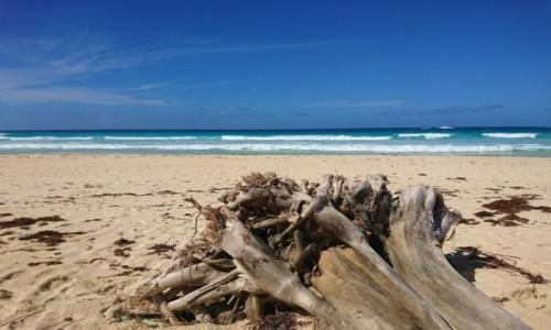 Zdjecie DOMINIKANA / Dominikana / Punta Cana / Odpoczynek nad oceanem