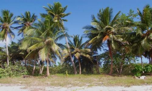 Zdjecie DOMINIKANA / La Altagracia / Saona / Wyspa Saona, Republika Dominikańska