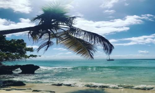 Zdjecie DOMINIKANA / Półwysep Samana  / Półwysep Samana  / Kultowa palma na Samana