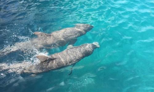 Zdjecie DOMINIKANA / Puerta Plata  / Ocean World  / Para delfinów