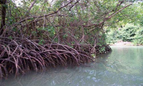 Zdjęcie DOMINIKANA / Park Narodowy Los Haitises / Park Narodowy Los Haitises / Mango