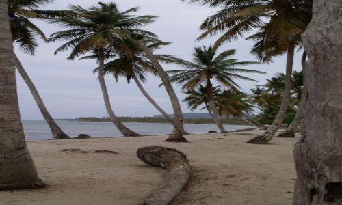 Zdjecie DOMINIKANA / brak / Dominikana / Las Galeras / Plaża