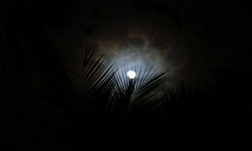 Zdjęcie DOMINIKANA / Bayahibe / Bayahibe / Karaiby
