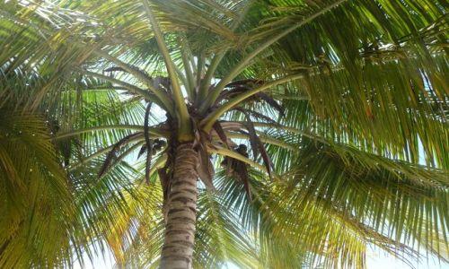 Zdjecie DOMINIKANA / Morze Karaibskie / Wyspa Saona / Piękno korony