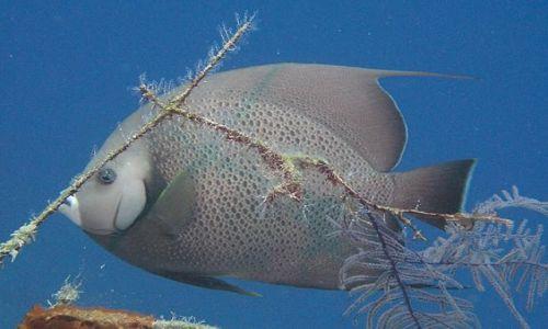 Zdjęcie DOMINIKANA / Punta Cana / Bavaros / ryba