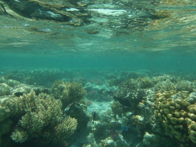 Zdjęcia: morze czerwone, wschodni egipt, Rafy koralowe, EGIPT