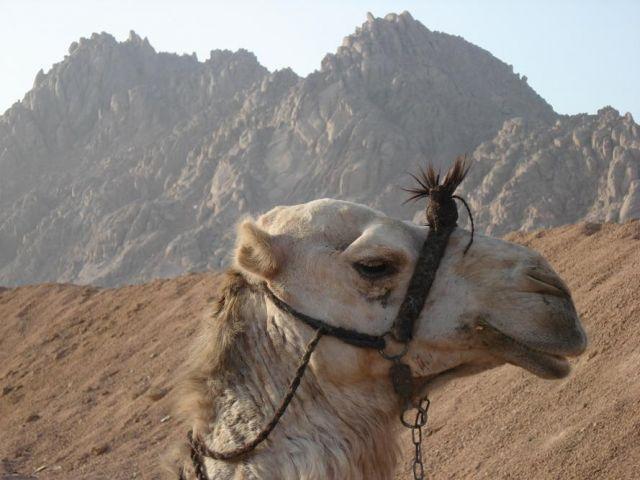 Zdjęcia: Sharm , Sharm, Profil , EGIPT
