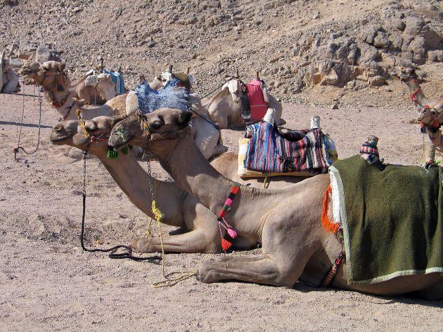 Zdjęcia: Hurgada-, Zmęczeni, EGIPT