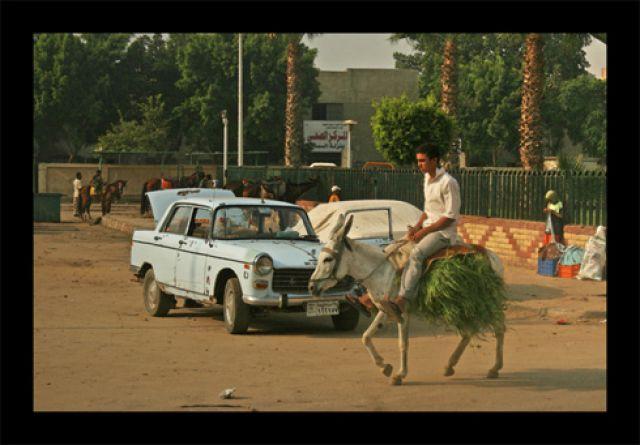 Zdjęcia: giza, giza, giza-, EGIPT