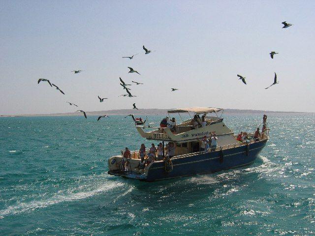 Zdjęcia: Morze Czerwone, Gdzieś na Morzu Czerwonym, EGIPT