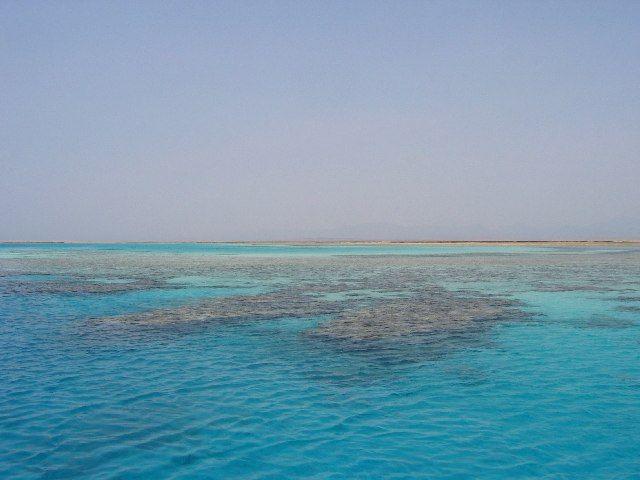 Zdjęcia: Morze Czerwone, Rafa, EGIPT