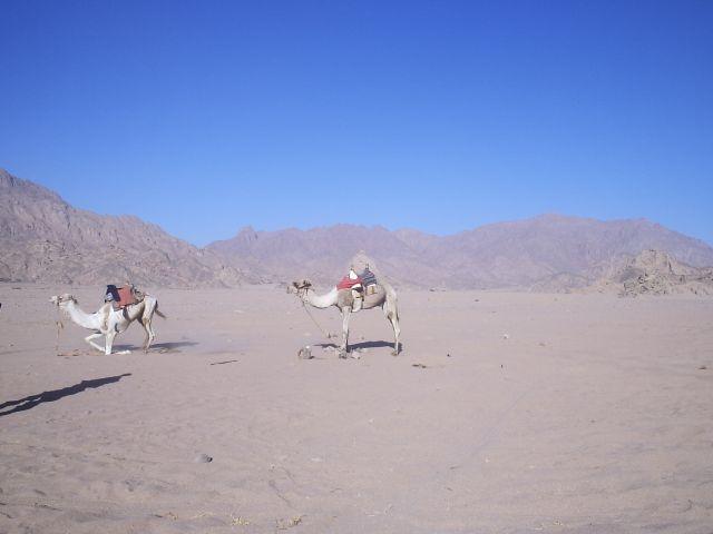Zdjęcia: Synaj, Synaj , Egipt, EGIPT