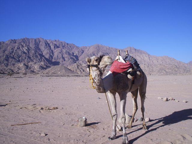 Zdj�cia: Synaj, Synaj , Egipt, EGIPT