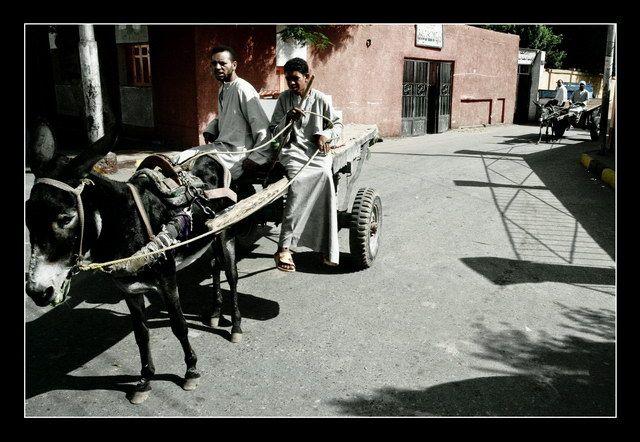 Zdjęcia: Edfu, Donkey King, EGIPT
