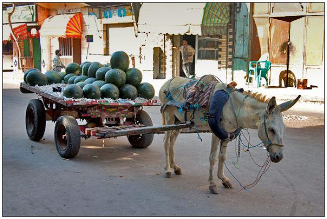 Zdjęcia: gdzieś potpatrzone, Kair, Dostawa, EGIPT