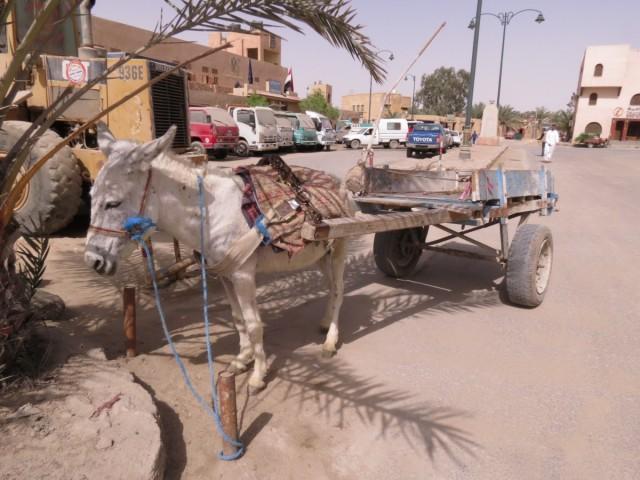 Zdjęcia: Kair, Afryka, siwa centrum, EGIPT