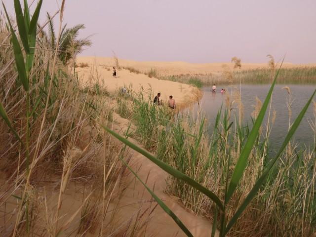 Zdjęcia:  Siwa, Afryka, siwa oaza jezioro, EGIPT