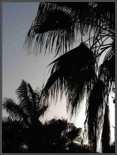 Zdjęcia: Hotel Alladyn, Egipt - Hurgarda, palmy, EGIPT