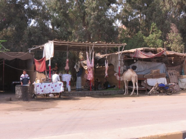 Zdjęcia: Kair, Afryka, Kebda Camel 3, EGIPT