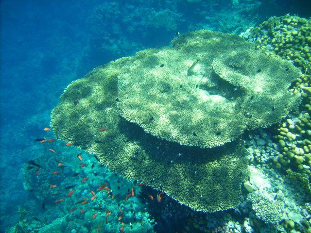 """Zdjęcia: Ras Mohamed, zatoka Aqaba, koralowa """"półka"""", EGIPT"""