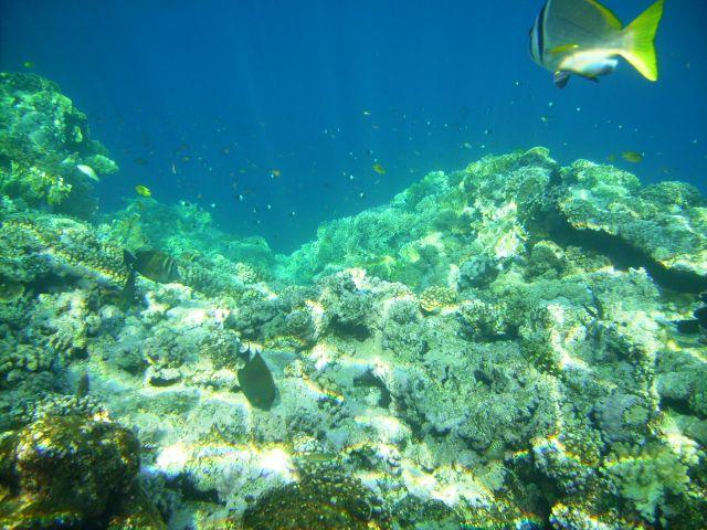 Zdjęcia: Sharm el Sheikh, zatoka Nabq, zatoka Aqaba, na rafie..., EGIPT