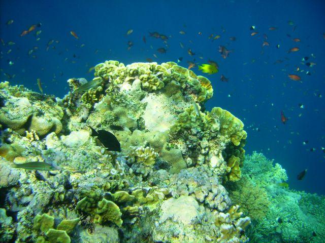 Zdjęcia: Sharm el Sheikh, zatoka Nabq, Zatoka Aqaba, podwodna panorama..., EGIPT